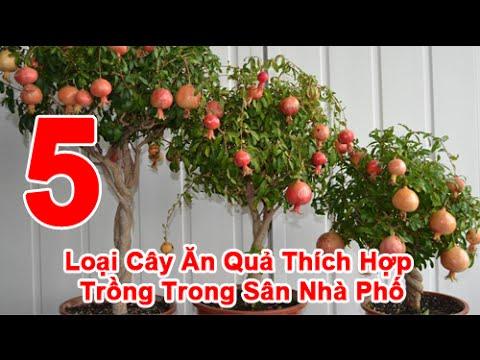 5 Loại Cây Ăn Quả Thích Hợp Trồng trong Sân Nhà Phố
