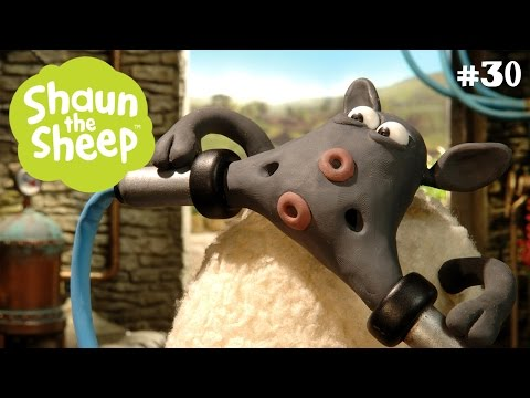 Chủ trại bất đắc dĩ - Những Chú Cừu Thông Minh