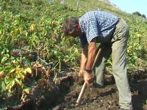 Coltivazione patate in montagna youtube for Coltivare more in vaso
