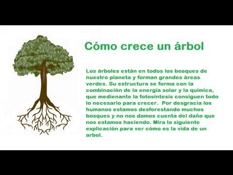 C mo crecen los rboles youtube for Arboles de hoja perenne que crece rapido