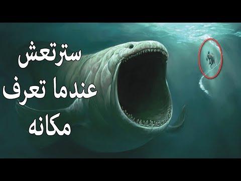هل تعلم أن الحوت الذى ابتلع سيدنا يونس حي حتي الان؟
