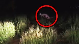 11 Scary Creatures Accidentally Caught on Camera