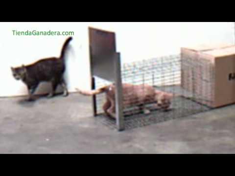 El cazador cazado youtube - Trampas para cazar ratas ...