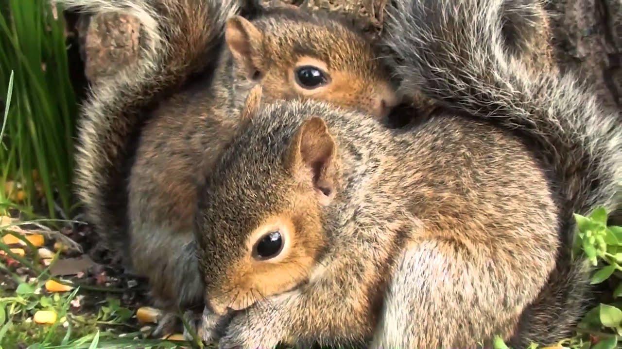 Cute Fat Squirrel wallpaper
