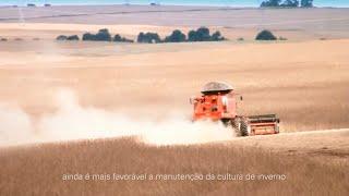 Sucessão trigo-soja: viabilidade e estabilidade para o sistema de produção