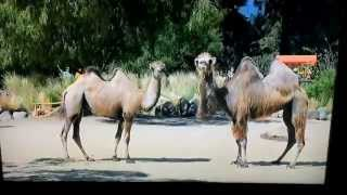 New Hump Day Commercial.