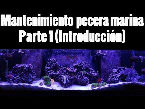 Mantenimiento de una pecera marina - Parte 1