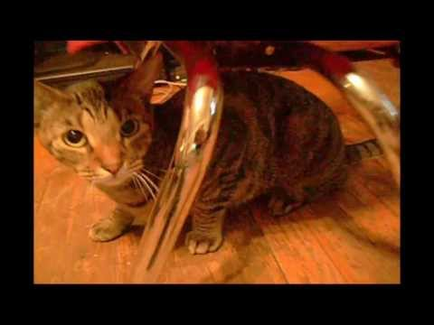 Funny Cats Fight & Roll in Catnip