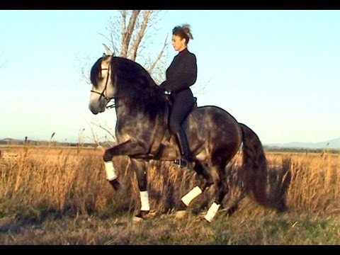 Dressage artistique cheval