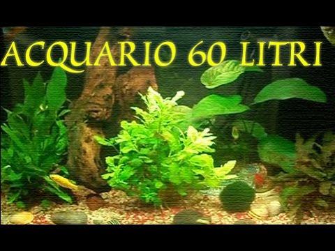 Acquario pesci rossi youtube for Acquario 60 litri prezzo