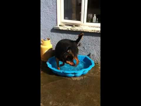 Sasha having a go in the pool