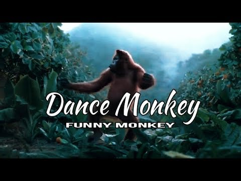 DANCE MONKEY (Tones and I) - Original Funny Monkey