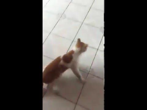 [Hài hước] Chuột rượt mèo chạy cong đít như phim hoạt hình Tom và Jerry