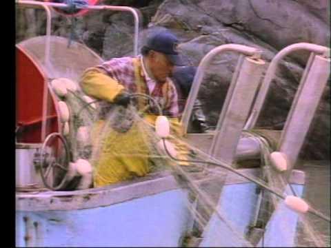 Skeena Steelhead,Symbol of Survival 1993