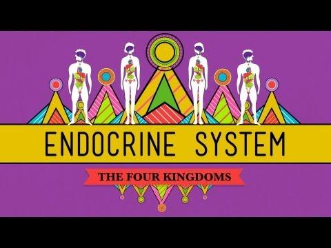 Great Glands - Your Endocrine System: CrashCourse Biology #33