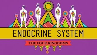 CrashCourse Biology: Your Endocrine System