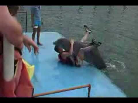 Dolphin mating Human