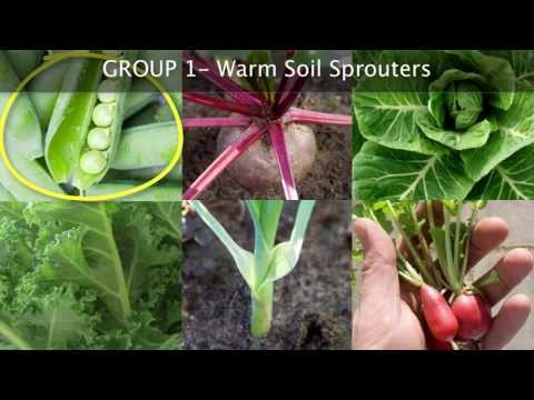 Choosing Plants for your Fall Vegetable Garden