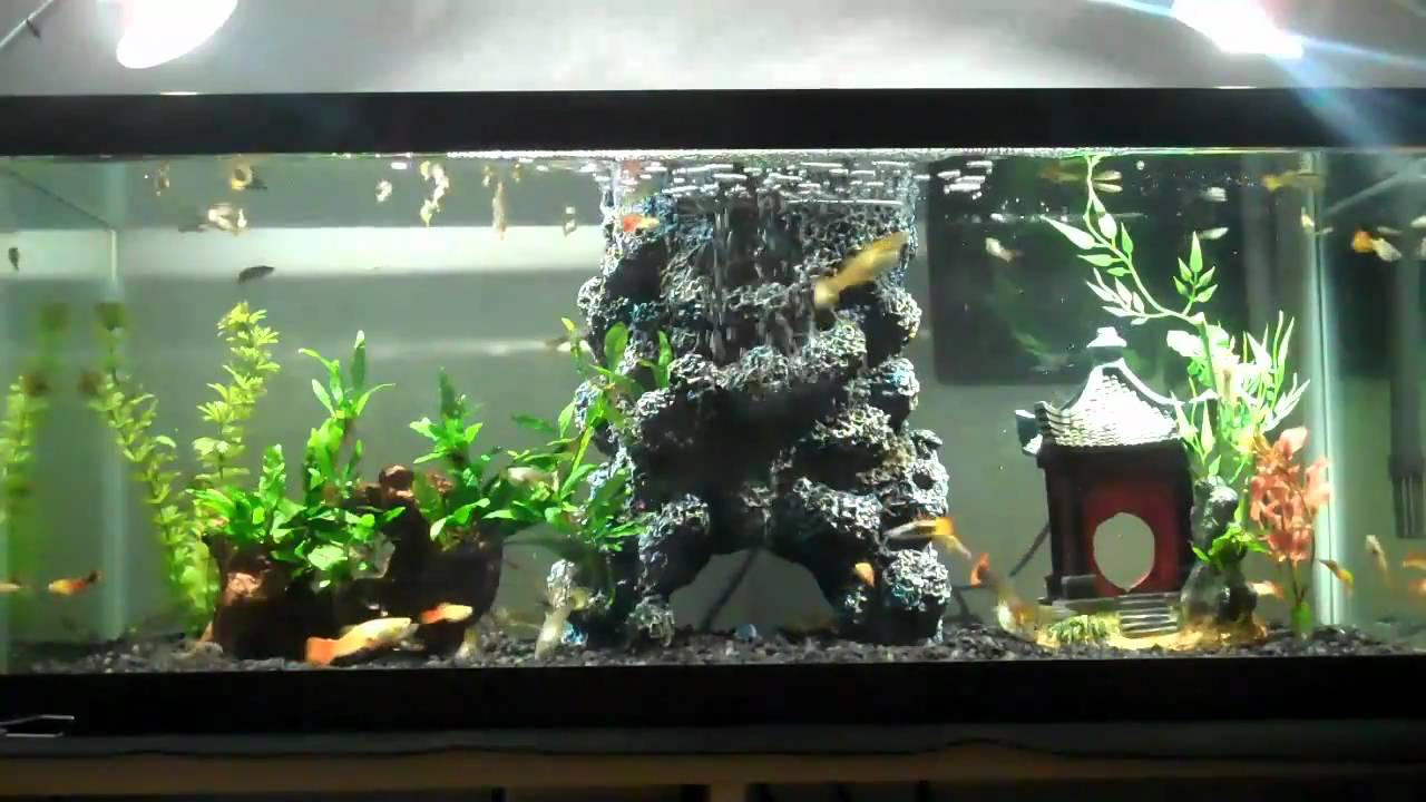 20 gallon tank youtube 20 gallon long planted tank for How many gallons in a fish tank calculator
