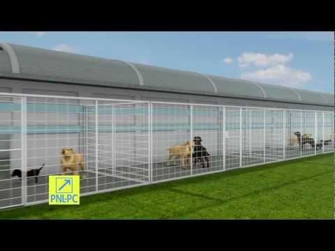 Adaposturi pentru 5.000 de caini comunitari