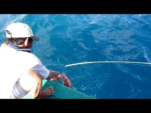 Câu cá Mú Đỏ ở biển Côn Đảo