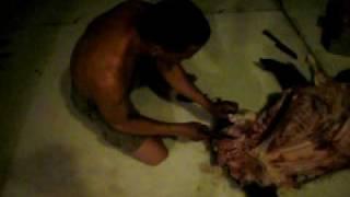 Limpando Porco Do Mato!!!itanhomi
