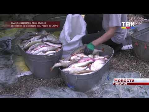 Жителя Искитимского района задержали за браконьерство