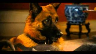 Cats And Dogs 2 Movie Trailer