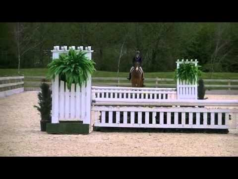 Rockafeller - Hunter/Derby/Eq horse for sale
