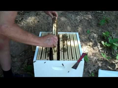 Beekeeper's New Swarm Follow up