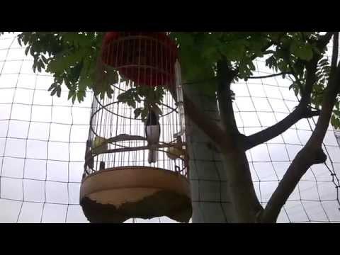 Chòe than già rừng & giai điệu mùa hè 2 (30-04-2014)