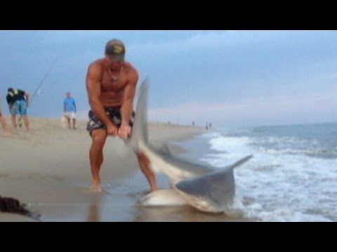 Man Wrestles Shark With Bare Hands: Caught on Tape