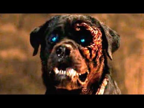 rottweiler trailer espa241ol youtube