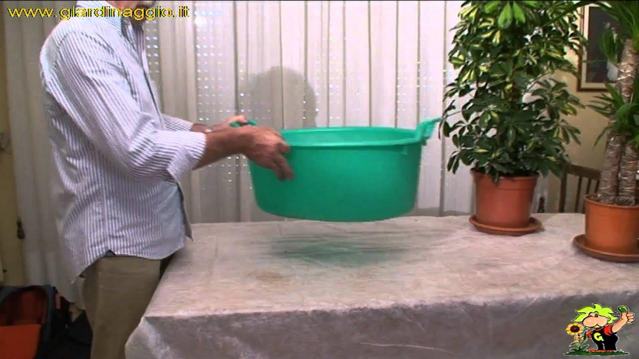 Come annaffiare le piante da appartamento youtube for Annaffiare le piante