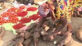 SARA 2017 A la découverte du manioc miracle du CNRA