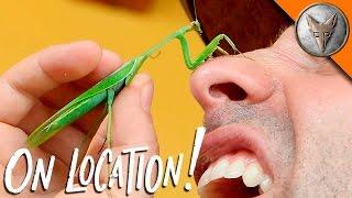 Mantis Karate Chops My Nose!