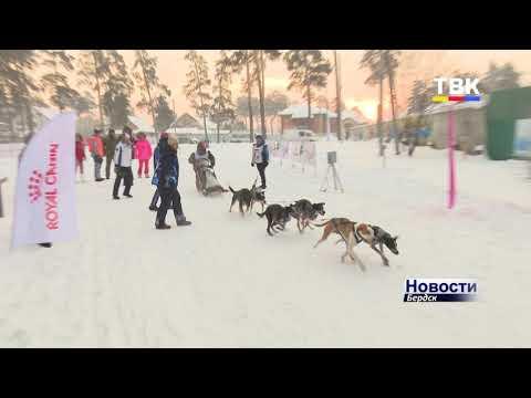 На лыжню – с собакой. Северные ездовые показали свои навыки на этапе Кубка России в Бердске
