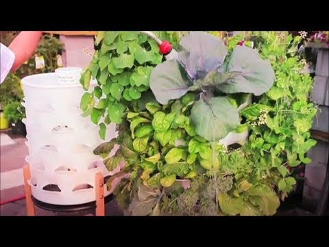 Organic Patio Farming: The Making of the Garden Tower Project