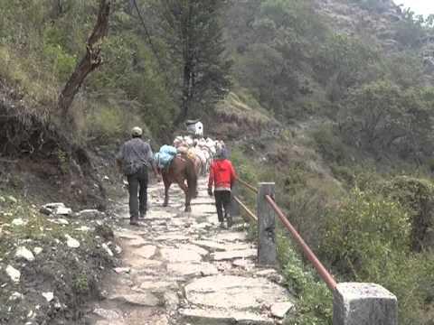 Passage d'anes, trekk ABC, Népal