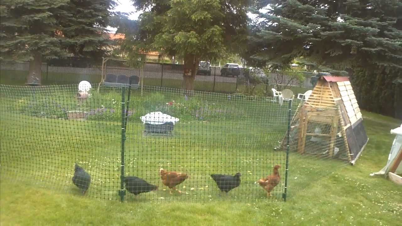Chicken Fence Run Youtube