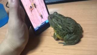 青蛙都識玩手機Game, 結果…