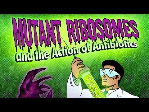 Public Lecture—Mutant Ribosomes and the Action of Antibiotics