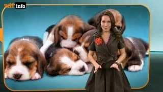 Reportage über Hunde