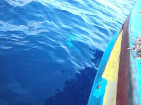 صيد سمكة التونة الزرقاء مع فريق عمر الصياد بالاسكندرية 27-9-2013