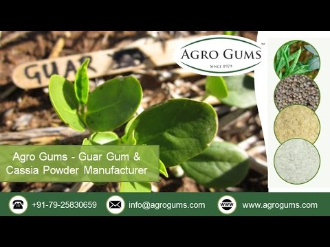 Impact of Guar Gum Production on Indian Global Economy -- by www.agrogums.com