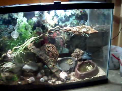 Pictures+of+hermit+crab+habitats