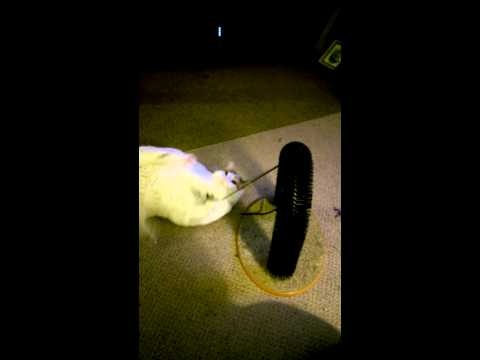 Funniest Cats Playing Dangerous Mouse Skill Games