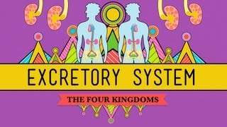 Crash Course Biology: The Excretory System