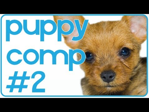 0 Funny Puppy And Dog Compilation (#2) For Pet Lovers