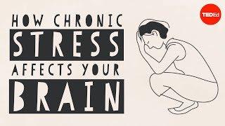 How stress affects your brain - Madhumita Murgia